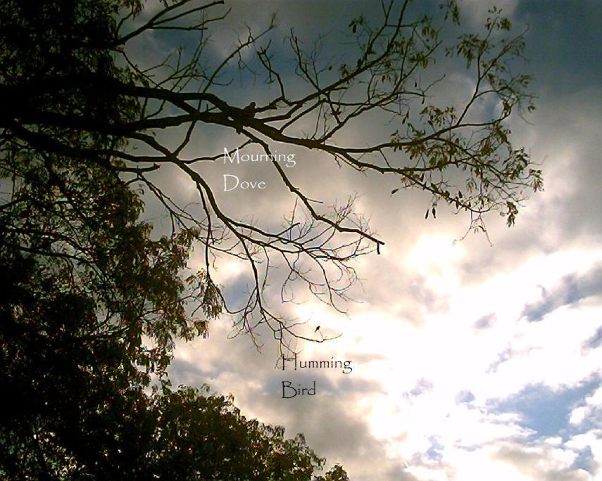 nature-memoirs-041.jpg