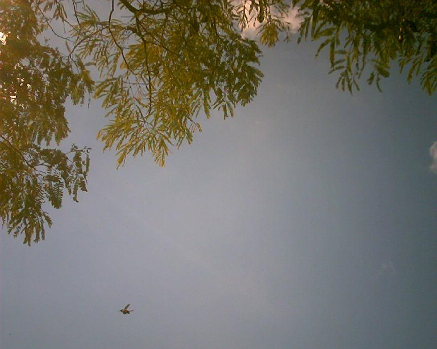 nature-memoirs3-020.jpg